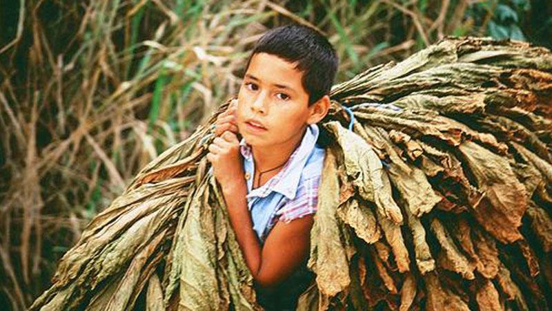 Resultado de imagen para niños tabacaleros en jujuy