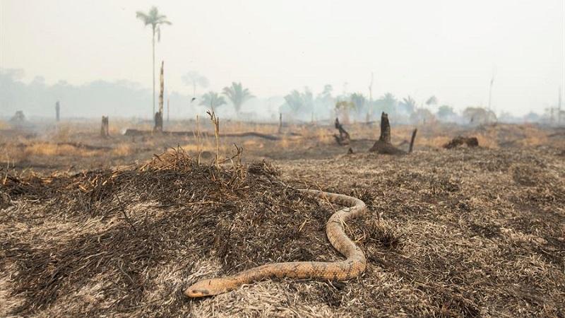Amazonin Sademetsä Palo