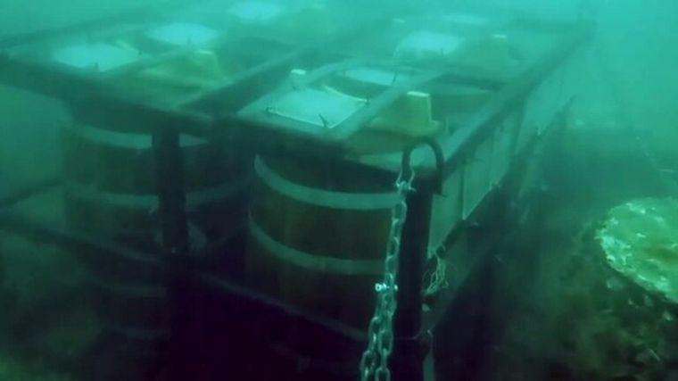 Mar del Plata: desaparecieron 600 litros de cerveza que se maceraban en barricas en el fondo del mar