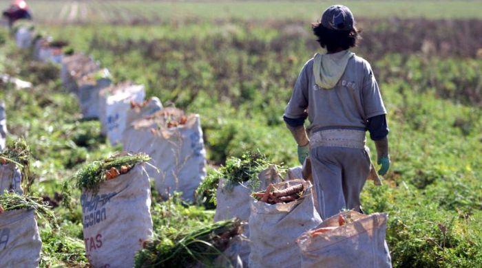 Resultado de imagen para trabajo infantil argentina