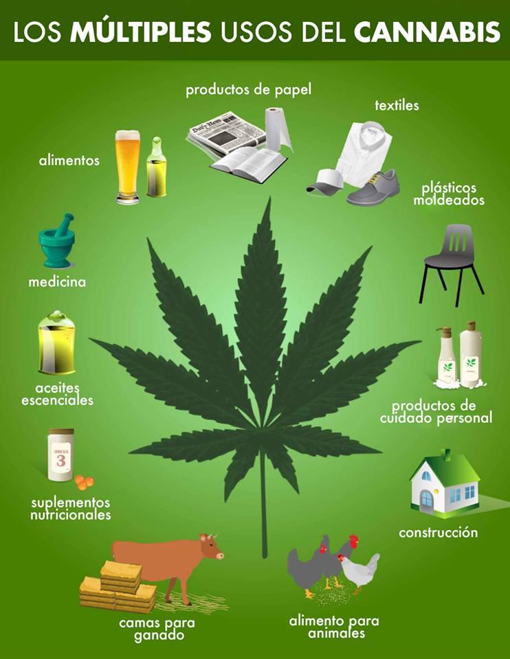 Resultado de imagen para imagenes cannabis usos medicinales