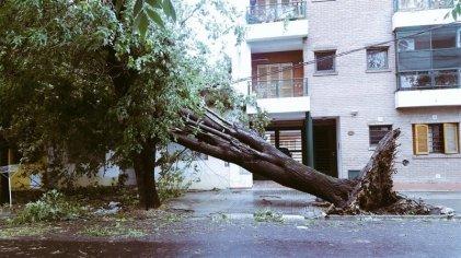 La Plata: lo que el viento nos dejó