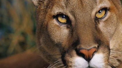 Secretaría de Ambiente flexibiliza las políticas de protección de la fauna silvestre