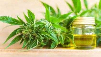 Gobierno peruano promulga ley de cannabis medicinal