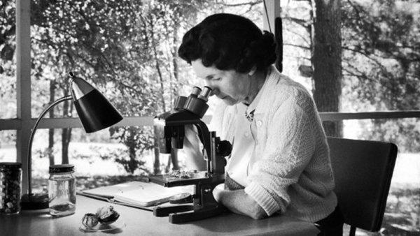 Rachel Carson, la mujer que enfrentó a las agroquímicas e inauguró el ecologismo contemporáneo