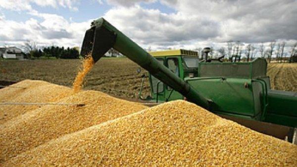 Guiño a empresarios: ministro de Áñez pretende liberar la exportación de soja